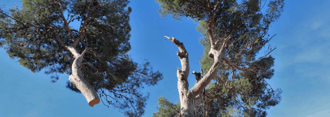 Élagage et Abattage d'arbre Montpellier